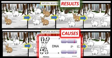 natural selection results vs causes
