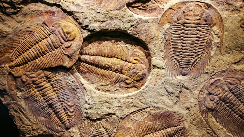 FOSSIL RECORD FAILS TO DEFEND EVOLUTION – Evolution is a Myth